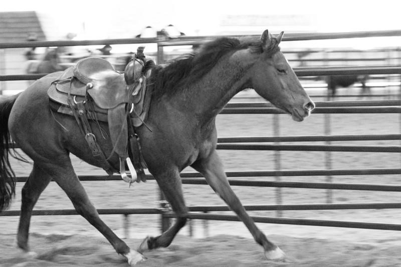 Horseman's Re-Union 2012